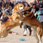 It's a dog's life – time for humans to fight back!